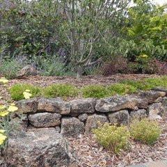 Caged Rock-Black Lichen