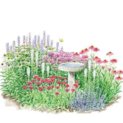 Sutherland Landscape how to build a butterfly garden