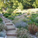 Sutherland Landscape northern California water saving plants and terraced pavers