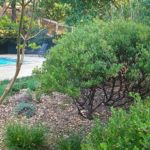 Xeriscape fire safe landscaping around pool by Sutherland Landscape