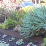 Fire safe gardens by Sutherland Landscape in Chico, CA