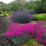 Defensible xeriscape landscaping by Sutherland Landscape in Chico CA